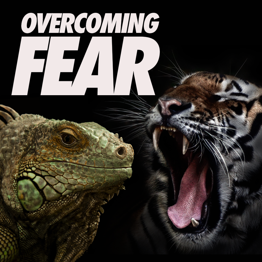 Narrative essays about overcoming fear